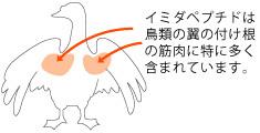 imidapeptide_img05.jpg